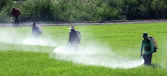 pesticides and environmental health