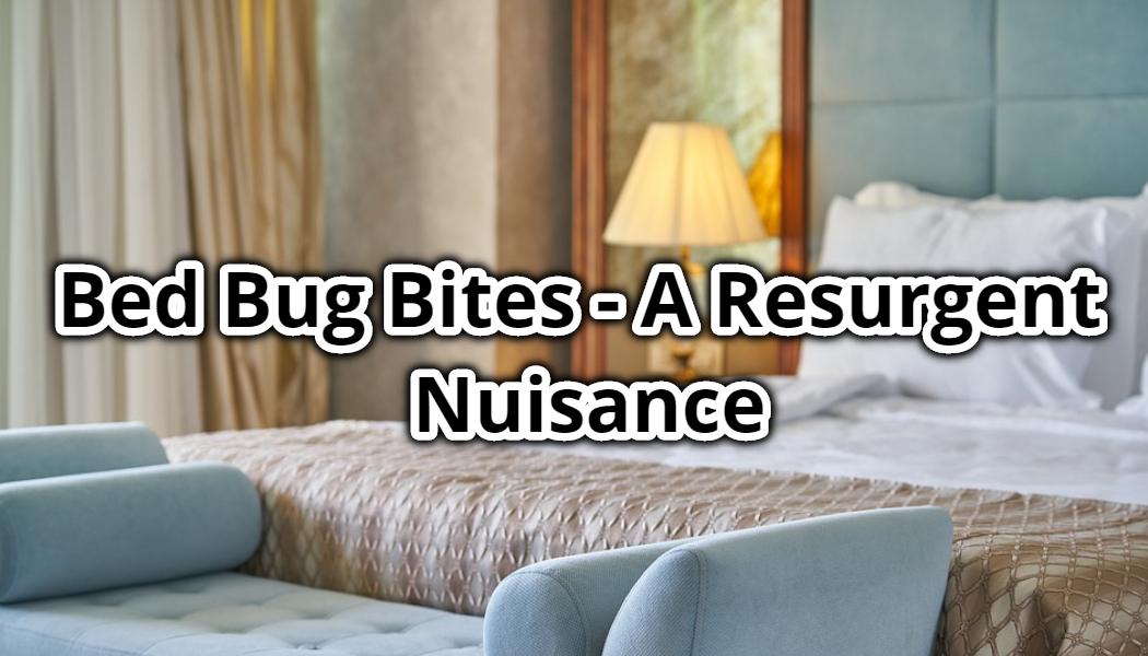 Bed Bug Bites A Resurgent Nuisance