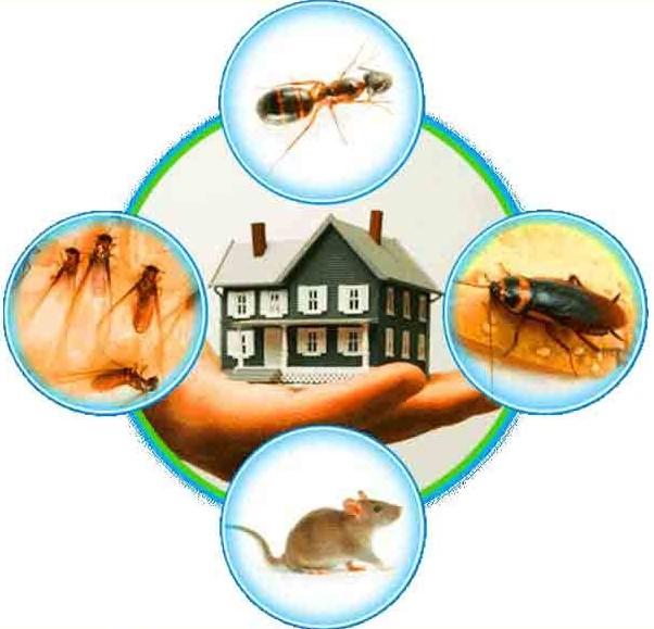 best pest control company