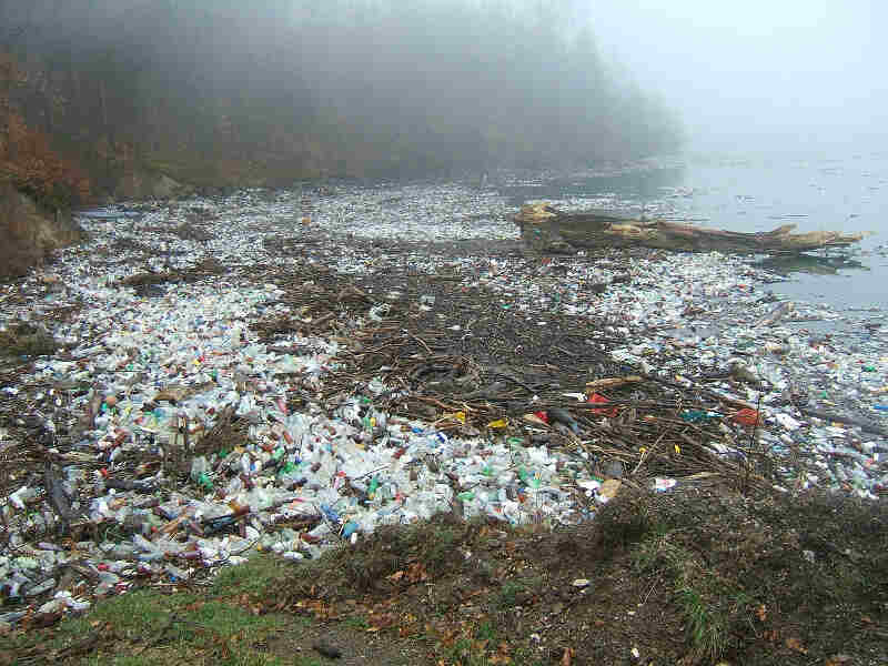 impacts microplastic pollution