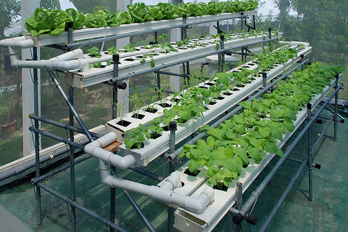 hydroponic-system-for-home