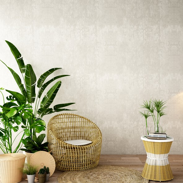 Indoor-Plants-for-Home