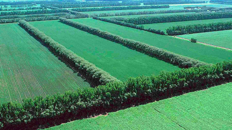 windbreaks as soil conservation method